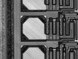 走査型共焦点赤外レーザ顕微鏡像