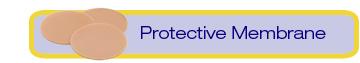 Protective Membrane
